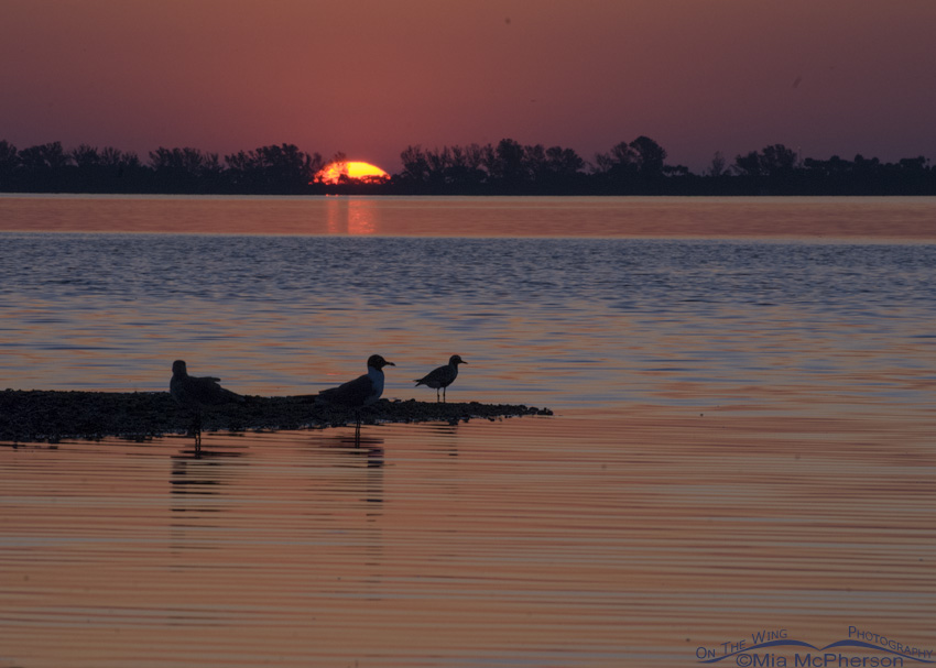 Sunrise with birds at Fort De Soto