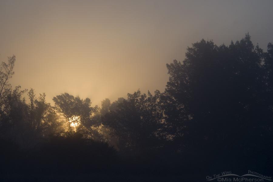 Sea fog sunrise at Fort De Soto