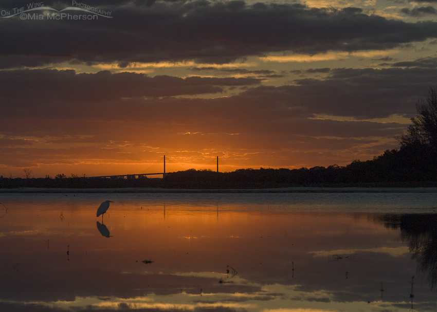 Sunrise, Great Egret and a tidal lagoon