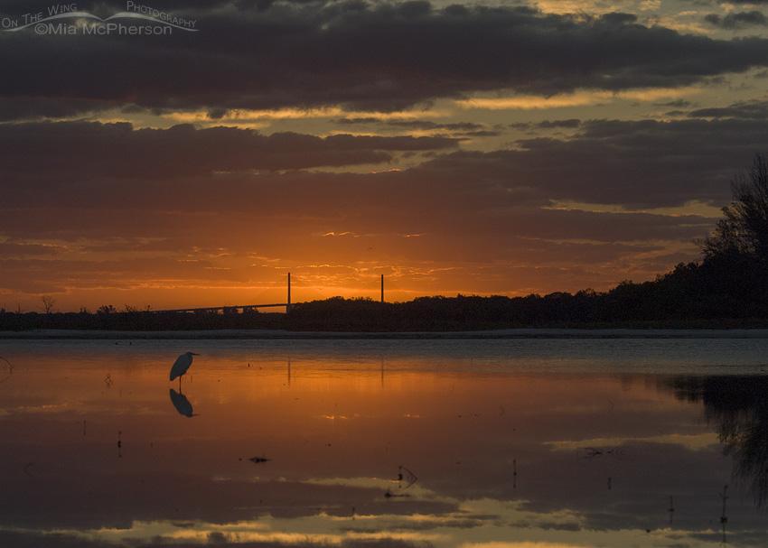 Sunrise, Great Egret and a tidal lagoon