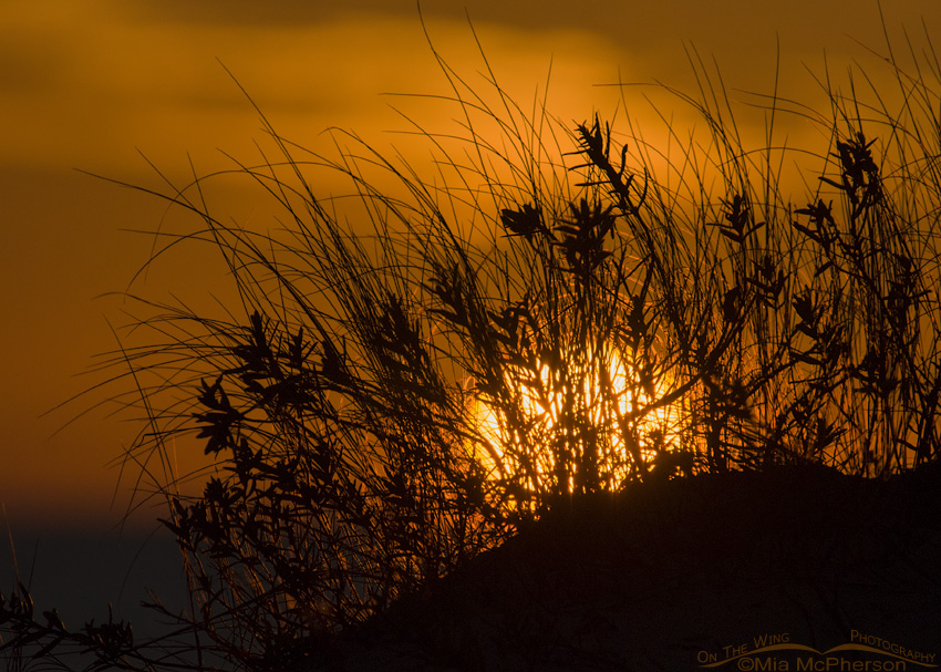 Sunset through grasses at Fort De Soto