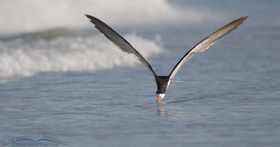 Skimmer skimming the Gulf