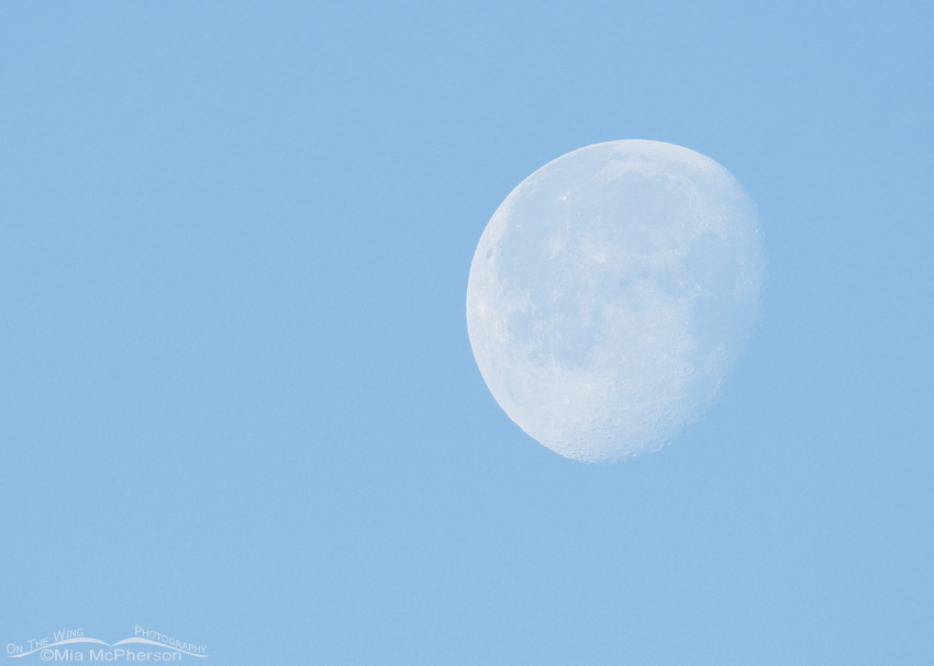 Setting Moon over the West Desert
