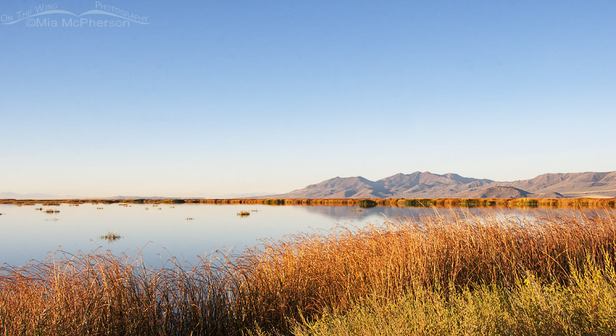 Colorful Autumn view of Bear River Migratory Bird Refuge