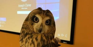 Galileo - the Short-eared Owl