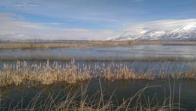 Flooded marshes at Bear River Migratory Bird Refuge