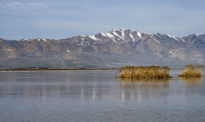Scenic March view of Bear River MBR with out of focus Midges removed