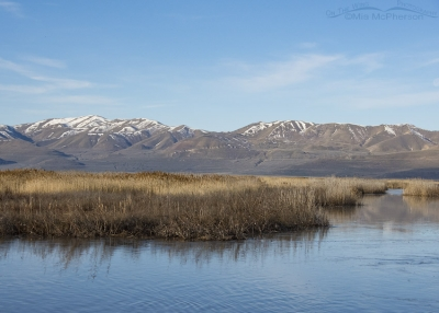 Spring view at Bear River MBR - March 15, 2017