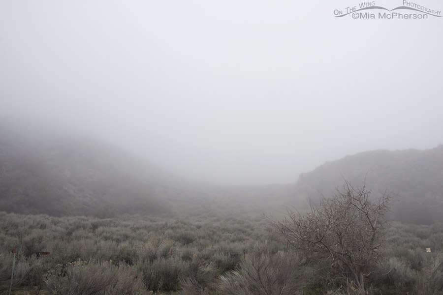 Foggy morning in Box Elder County