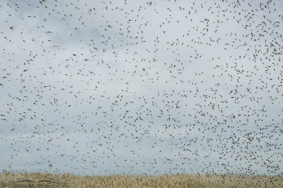 Midge swarm outside of my Jeep