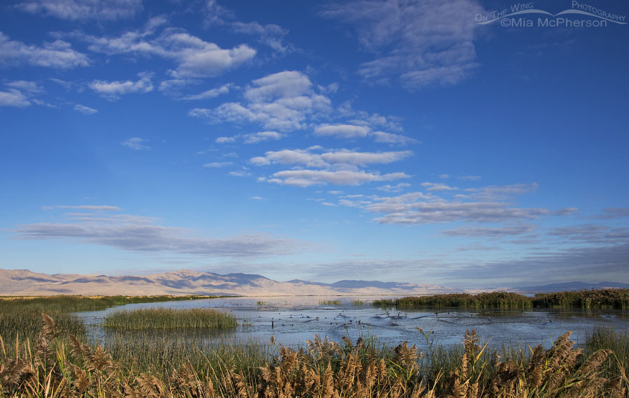 Bear River NWR marsh in early autumn