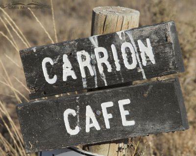 Carrion Cafe sign