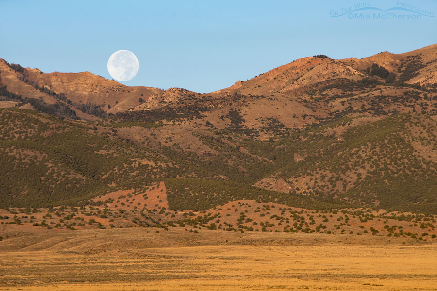 Harvest Moon Setting over the Stansbury Mountains October 6, 2017