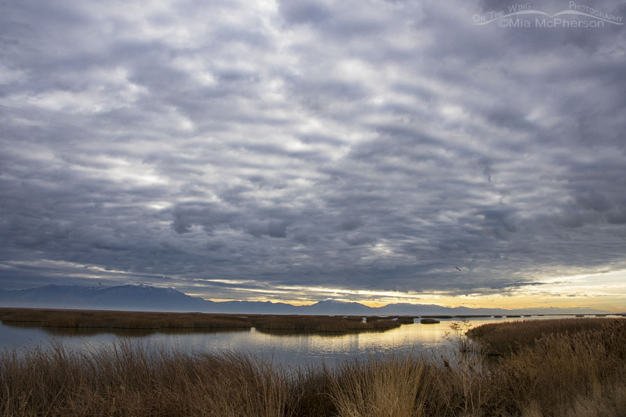 Heavy clouds over the marsh at Bear River MBR