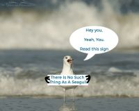 No Such Thing as a Seagull