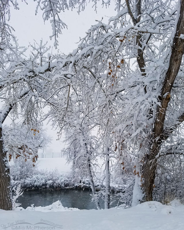 Snowy trees and the Jordan River