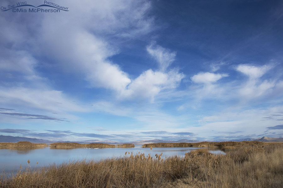 Tundra Swans, Clouds, Mountains and Bear River MBR