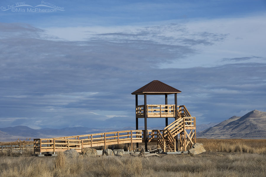 New observation tower at Bear River MBR