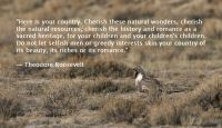 Here is your country - Greater Sage-Grouse on a Lek