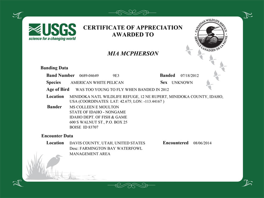 Certificate of Appreciation 9E3 American White Pelican