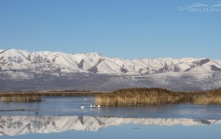 March scenery at Bear River Migratory Bird Refuge, Box Elder County, Utah
