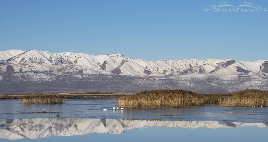 March scenery at Bear River Migratory Bird Refuge, Box Elder County, Utah