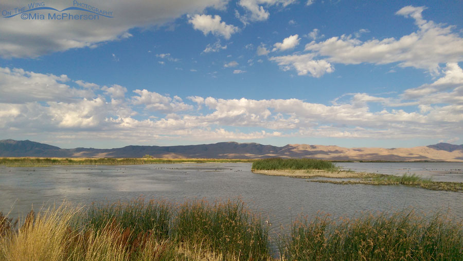 Southwest corner of the auto tour route at Bear River Migratory Bird Refuge