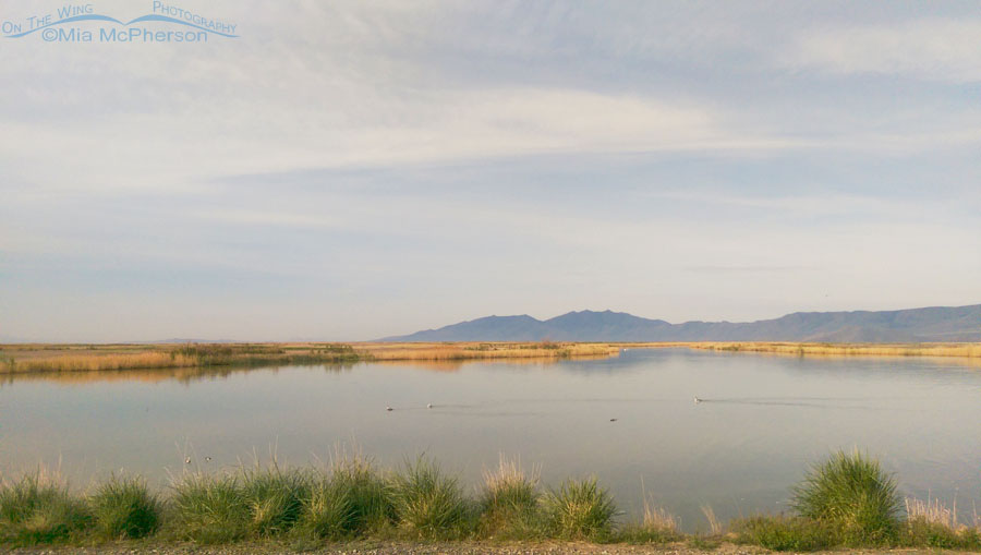 Looking west from one of the boat ramps at Bear River Migratory Bird Refuge
